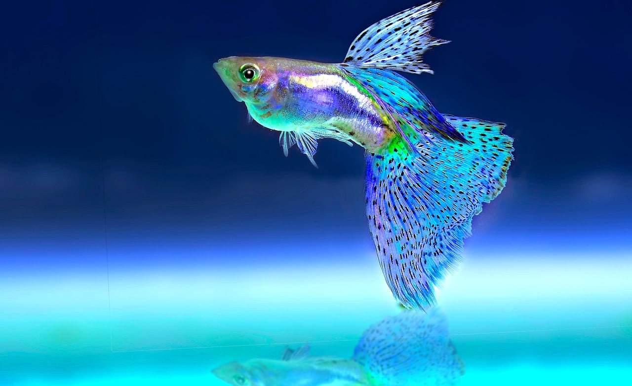 Biznes bez strony Internetowej czuje się jak rybka w brudnym akwarium...